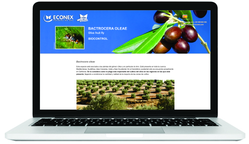 Specific website about Bactrocera oleae